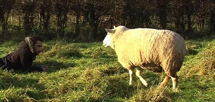 3. Sheep